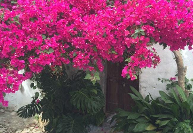 3 razones para viajar a Castellar de la Frontera en Cádiz