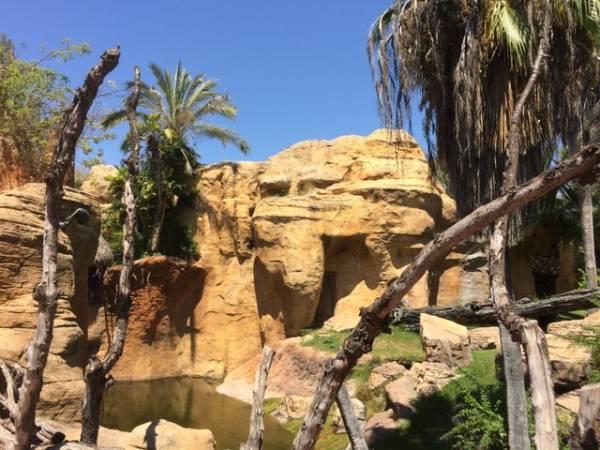 Bioparc, un parque de animales sin barreras