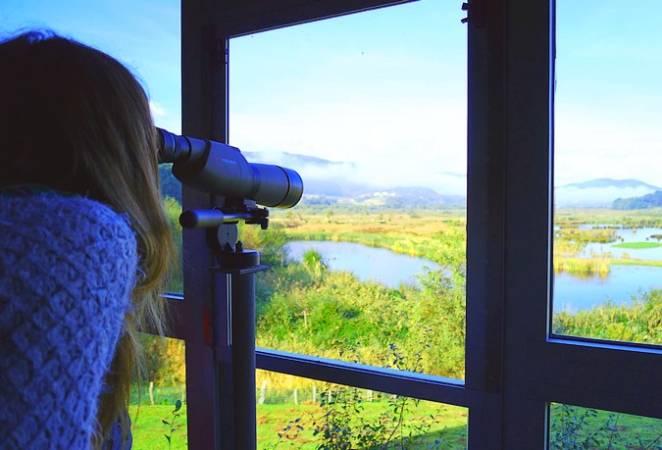 Disfruta a lo grande del birding en Bizkaia