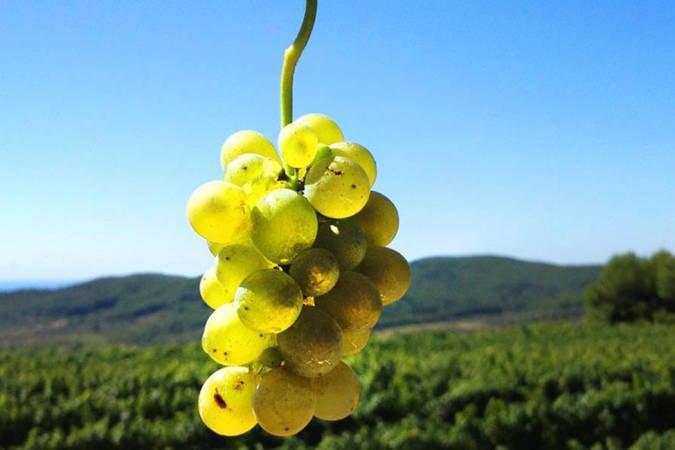 Visita las mejores bodegas en Tarragona
