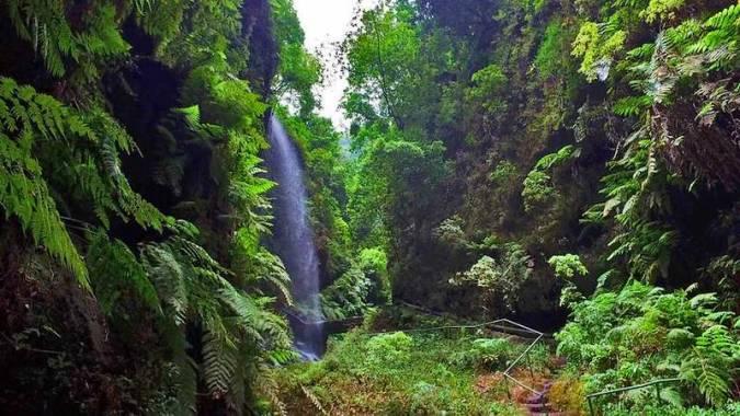 El Bosque de los Tilos, en La Palma