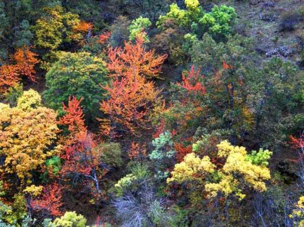 Lugros y su Bosque Encantado, en Granada