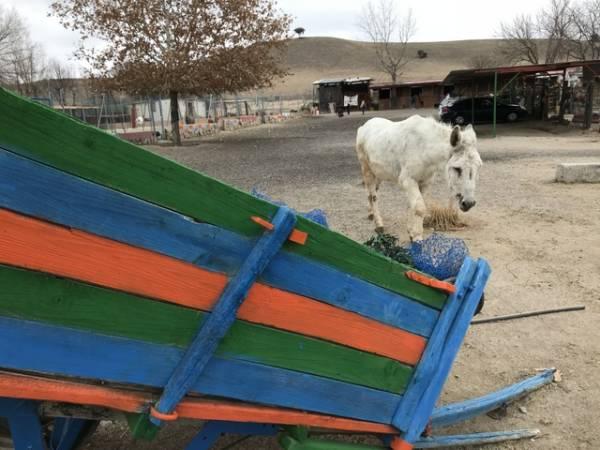 Burrolandia, amor por los burros