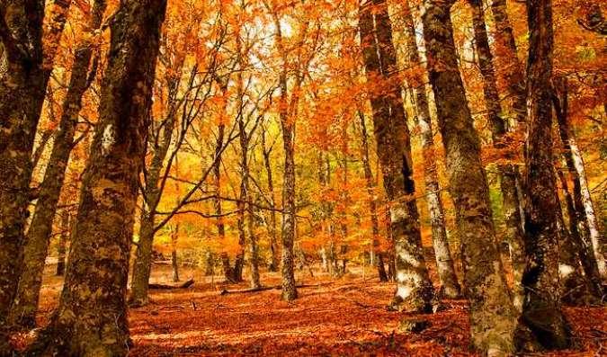 Escapadas de otoño: el Hayedo de Montejo, en Madrid