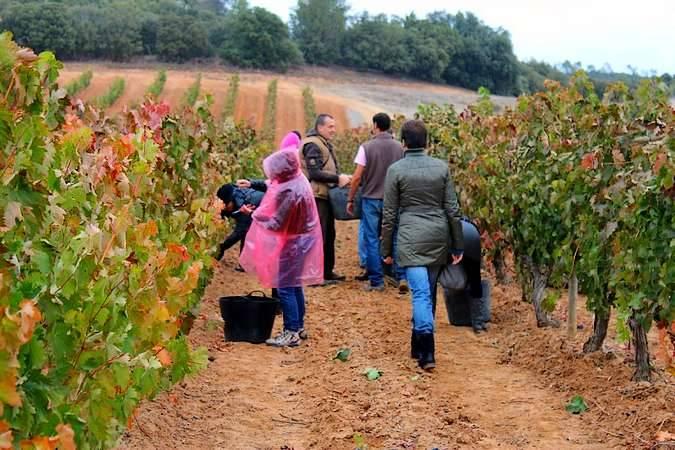 Cuatro escapadas para los amantes del vino