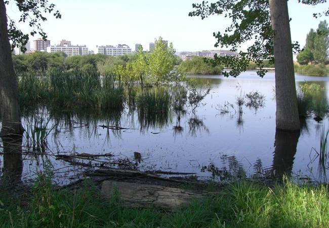 Parque de Salburua