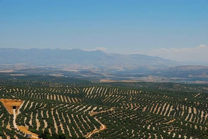 Mar de olivos en Baeza, Jaén