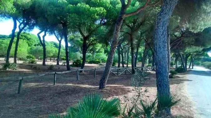 El Pinar de la Villa, en Chipiona, Cadiz
