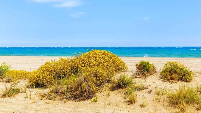 Playa de Punta Entinas-Sabinar, en El Ejido, Almería