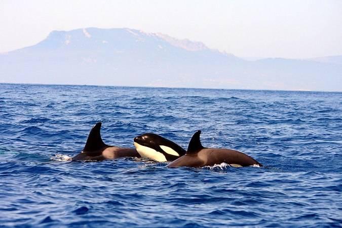 Avistamiento de ballenas, en Tarifa