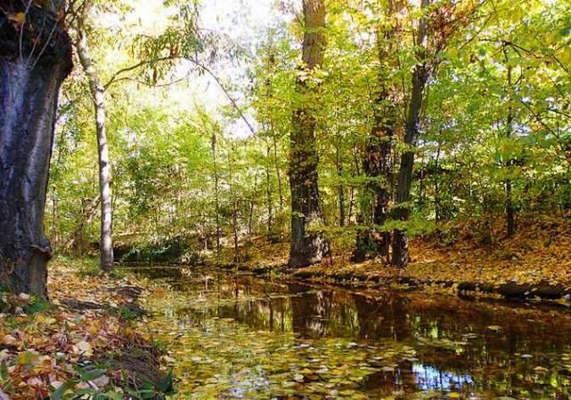 Bosque de Valorio, en Zamora