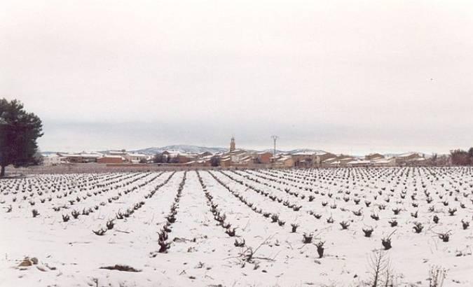Viñas nevadas en Los Corrales, en Utiel, Valencia