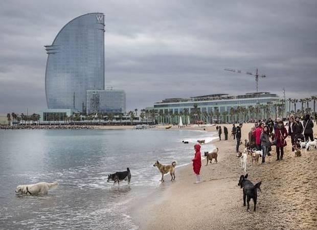 Hoteles que aceptan mascotas en Barcelona