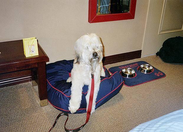 Hoteles que admiten mascotas en Málaga