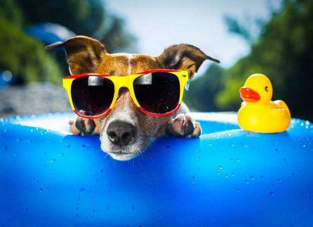 Hoteles que admiten mascotas en Torremolinos