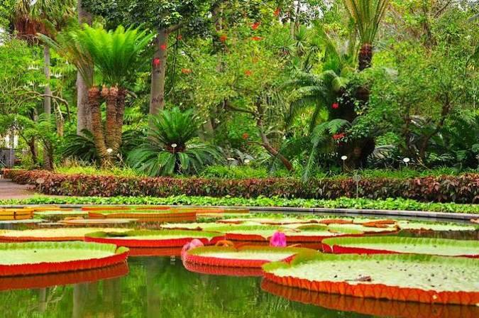 El Jardín Botánico de La Orotava, en Tenerife