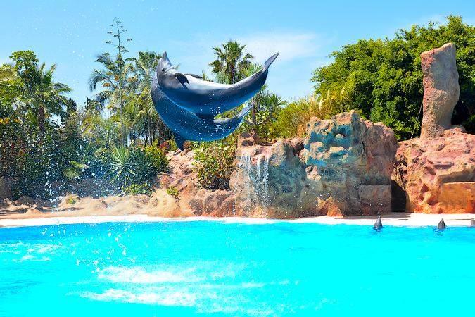 Turismo en familia: Loro Parque, en Tenerife