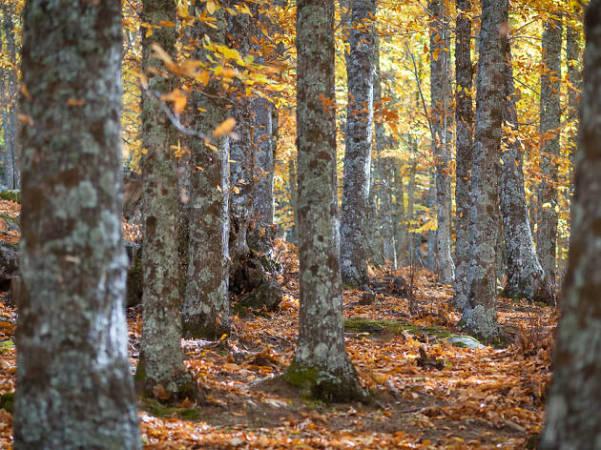 bosques madrid