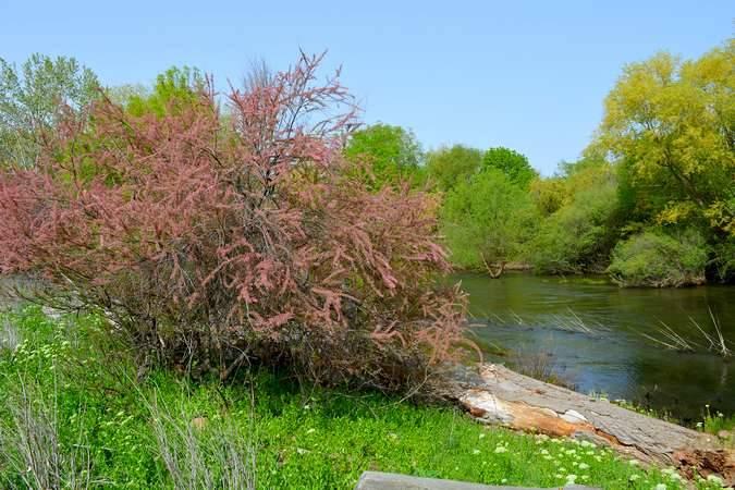 El río Jarama a su paso por Paracuellos de Jarama
