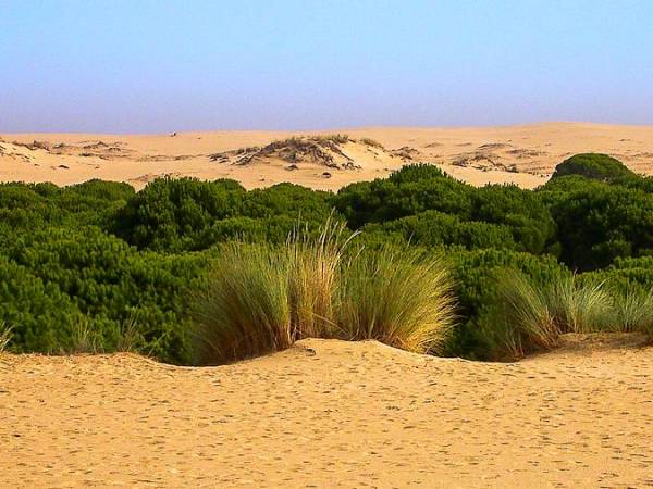 Dunas y pinares en Doñana