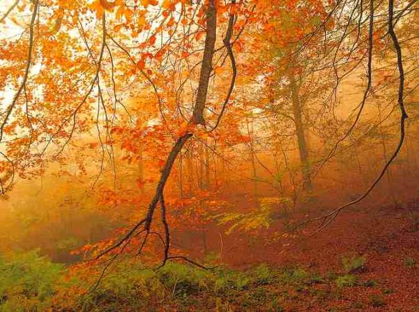 El Parque Natural del Montseny, destino ideal para el otoño