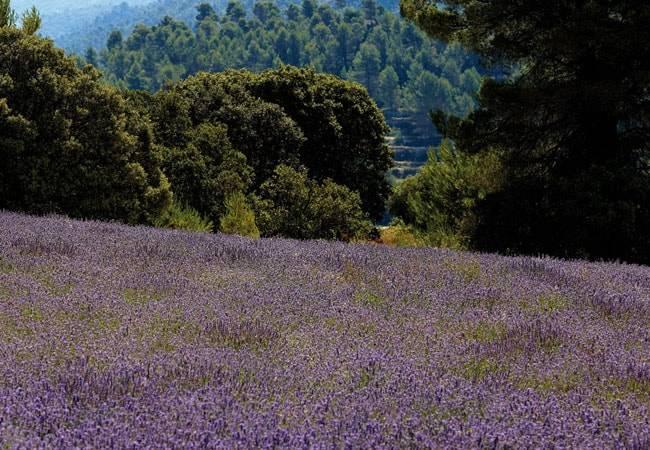 Naturaleza en Sierra Mariola