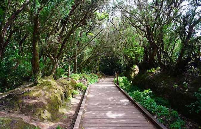 Sendero de los Sentidos, en el Parque Rural de Anaga, en Tenerife