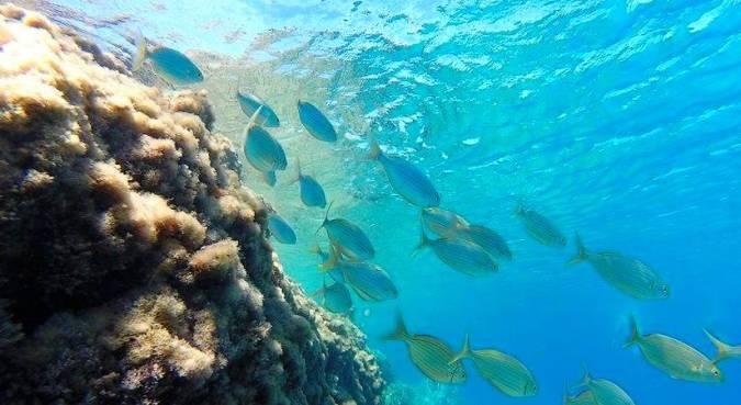 Fondo marino de la playa de los Muertos, en Carboneras