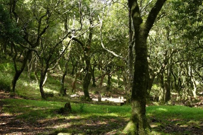 Benalup-Casas Viejas: Parque Natural de los Alcornocales