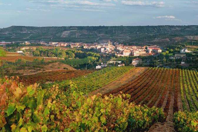 Viñedos en la localidad de Cenicero, en La Rioja