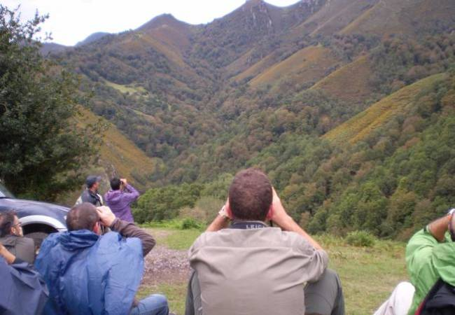 La berrea en el Principado de Asturias