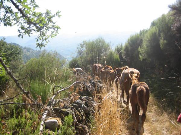 Caballos en Porto de Sanabria, Zamora