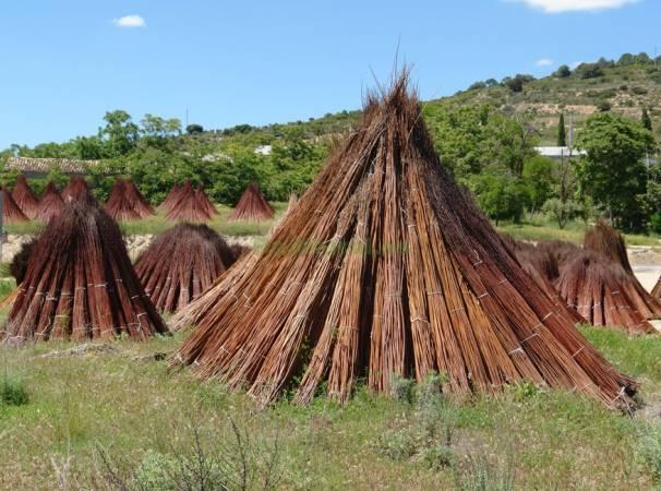 Secado del mimbre en Priego, Cuenca