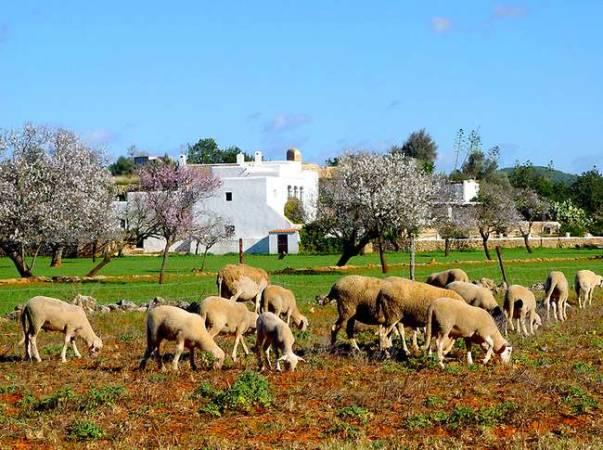 Santa Inés: las Puertas del Cielo están en Ibiza