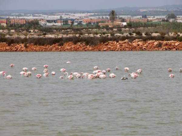 Salinas de San Pedro, en La Manga, Murcia