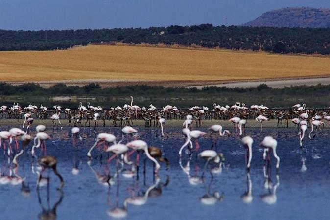 La Reserva Natural de Fuente de Piedra, en Málaga