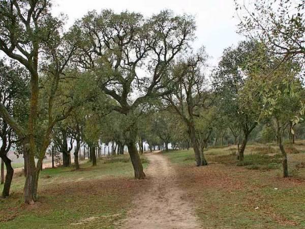 Senda Botánica de El Sotillo, en Villaviciosa de Odón, Madrid