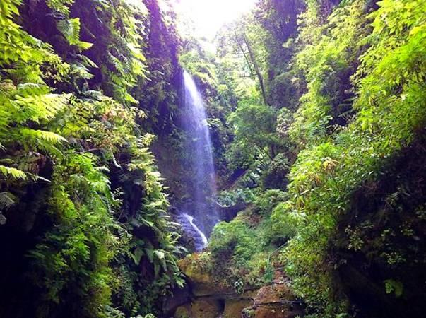 Bosque de los Tilos, en La Palma