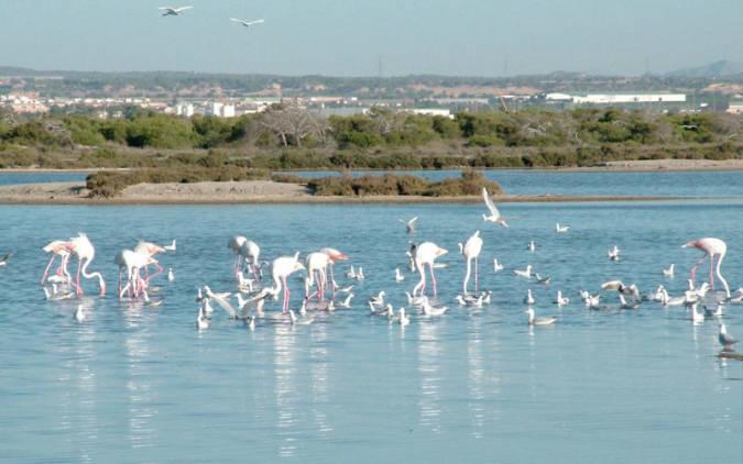 Parque Regional de las Salinas y Arenales de San Pedro del Pinatar