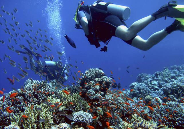 Buceo mergulloviveiro
