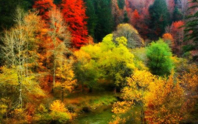 La impresionante Selva de Irati, en Navarra