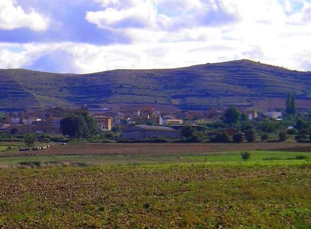 Coger setas en la Sierra de Moncalvillo, en La Rioja
