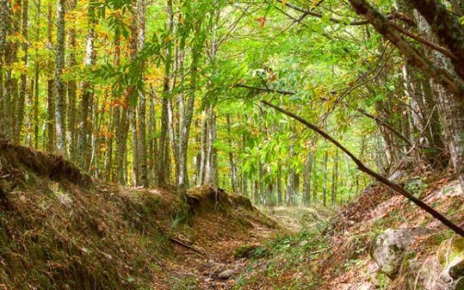Tres bosques de cuento de hadas en Madrid