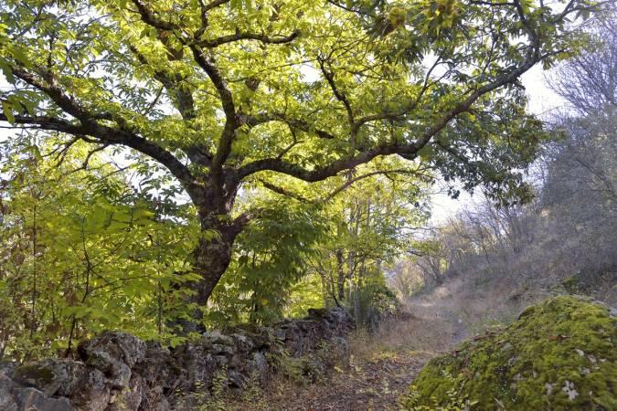 bosque castañar