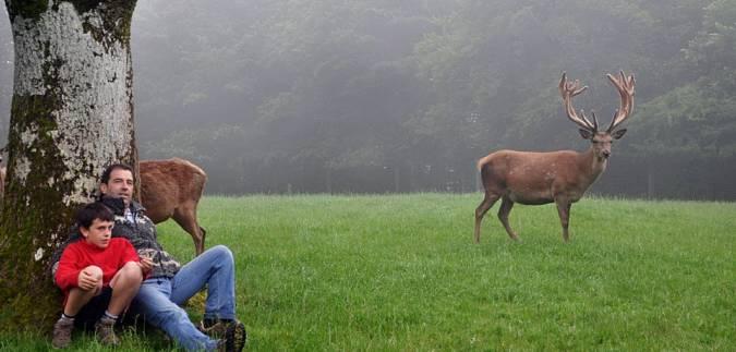 Ciervos en la Venta Ulzama, en Navarra